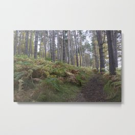 Forest and ferns Metal Print