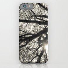 Sunlight through Hornbeam tree. Slim Case iPhone 6s
