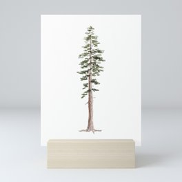Coastal Redwood Watercolor Mini Art Print