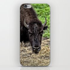The Bison Stare iPhone & iPod Skin