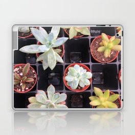 Succulent Squares Laptop & iPad Skin