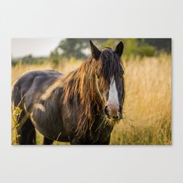 Autumn Horse Canvas Print