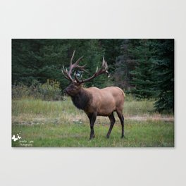 Look at Me! Canvas Print