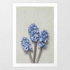Light Blue Hyacinths Art Print