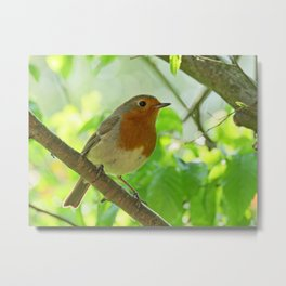 Robin in the bushes Metal Print