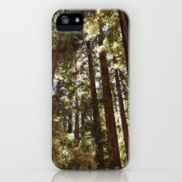 Redwood Forest XII iPhone Case
