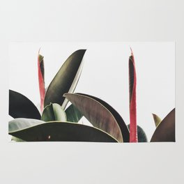 Rubber tree Rug