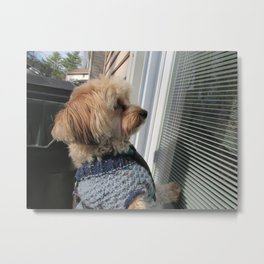 Copper looking for Daddy Metal Print