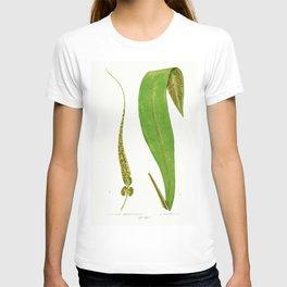 Edward Joseph Lowe - Asplenium Rhizophyllum T-shirt