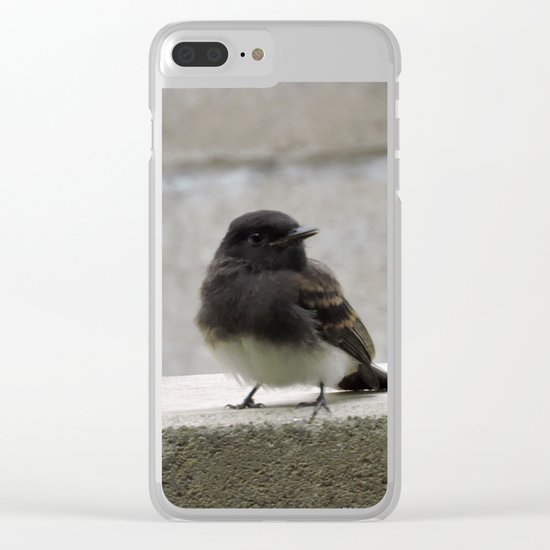 Young Black Phoebes Clear iPhone Case