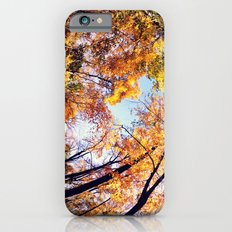 Fisheye Fall  iPhone 6s Slim Case