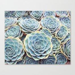 Succulent Garden Canvas Print