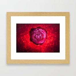 Rose 01 Framed Art Print