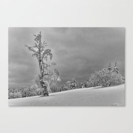 Solitary Snowy Tree in Black and White - Landscape Photography Canvas Print