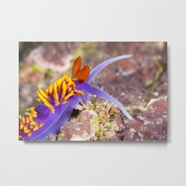 Spanish Shawl from Channel Islands Metal Print