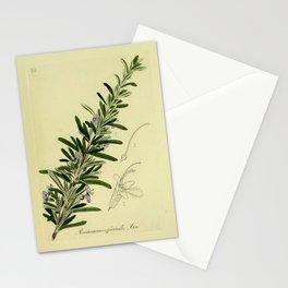 Botanical Rosemary Stationery Cards