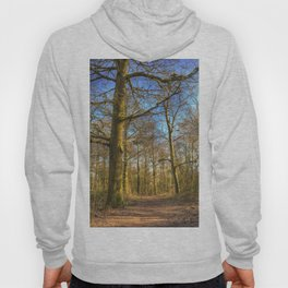 The Forest Path in Springtime Hoody