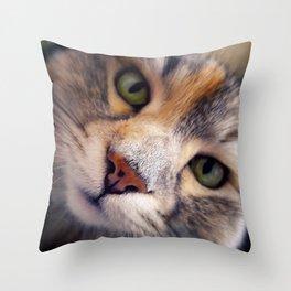 Siberian cat. The Cleopatra's nose. Throw Pillow