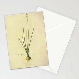 ornithogalum tenuifoliu Redoute Roses m Stationery Cards