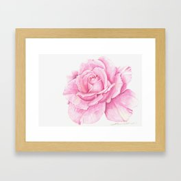 Deep Pink Rose with a touch of yellow Framed Art Print