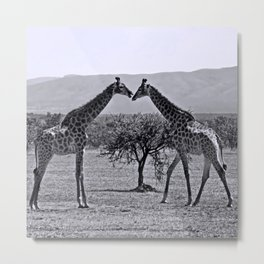 Giraffe talk Metal Print
