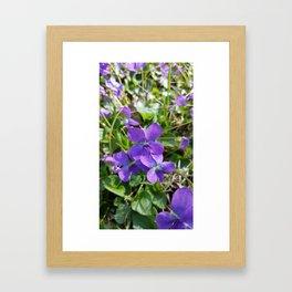 Violets in Spring Framed Art Print