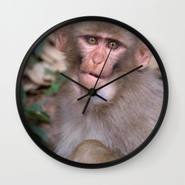 Young Rhesus Macaque with Food in Cheeks Wall Clock