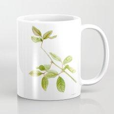 A branch of the tree Psidium fortium Mug