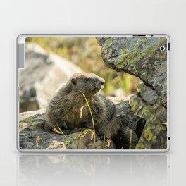 Marmot on Naches Peak Laptop & iPad Skin