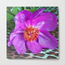 Violet Blossom - Leo Look  Metal Print