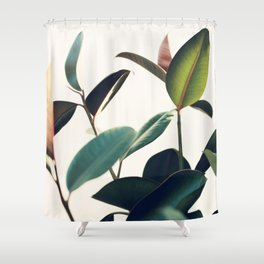 Ficus Elastica #8 Shower Curtain