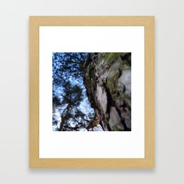 Up To The Tree Tops Framed Art Print