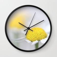 Matricaria (German chamomile) (3) Wall Clock