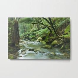 River through lush rainforest in Great Otway NP, Victoria, Australia Metal Print