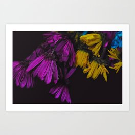 Withered Daisies Art Print