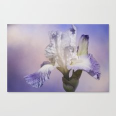 White Bearded Iris Canvas Print