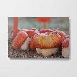 Country Pumpkins  Metal Print