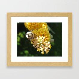 Hello Mr Bumblebee! Framed Art Print