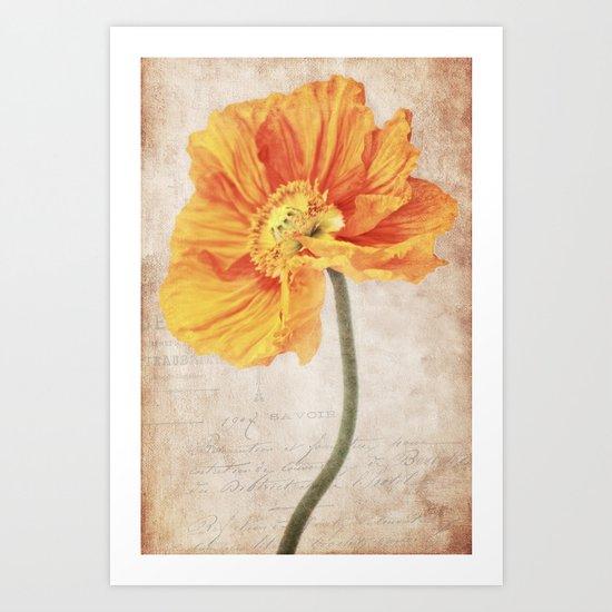 Bella orange Art Print