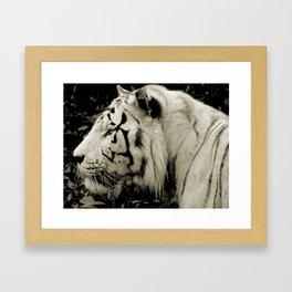 THE WHITE TIGER II Framed Art Print