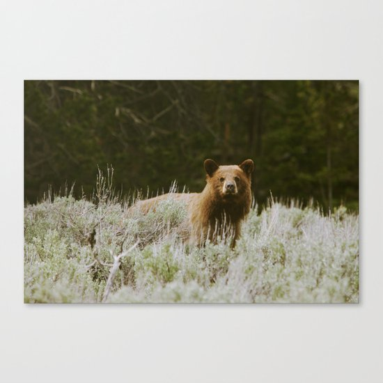 Bush Bear Canvas Print