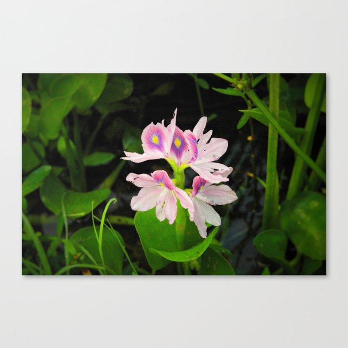 Swamp blooms Canvas Print
