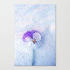 violette Canvas Print