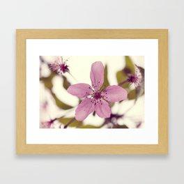 Pink blooming tree Framed Art Print