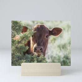 Shy Calf Mini Art Print