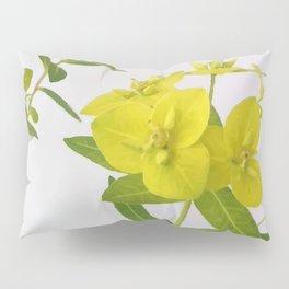 Euphorbia Cornigera Pillow Sham