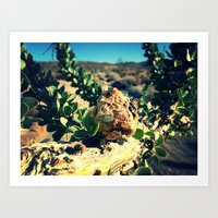 Borrego Springs Art Print