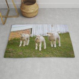 3 Little Lambs Rug