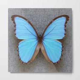 Blue Morpho Butterfly on Grey Metal Print