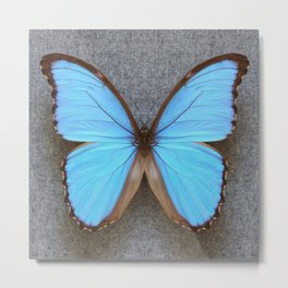 Blue Morpho Butterfly on Grey Metal Print